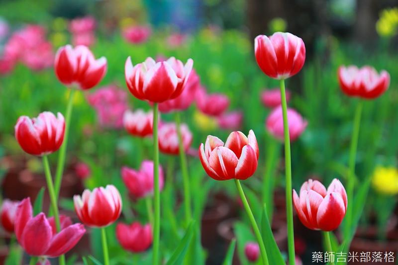 Nanyuan_farm_800.jpg