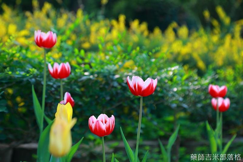 Nanyuan_farm_809.jpg