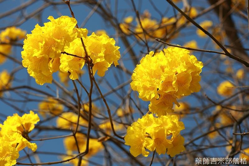 Tainan_150303_005.jpg