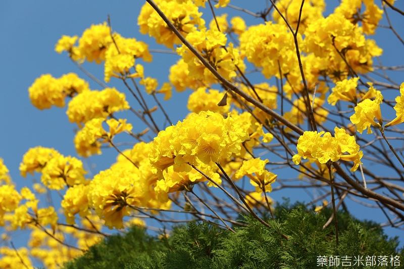 Tainan_150303_007.jpg