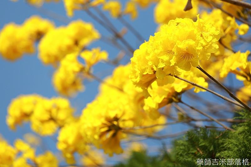 Tainan_150303_008.jpg