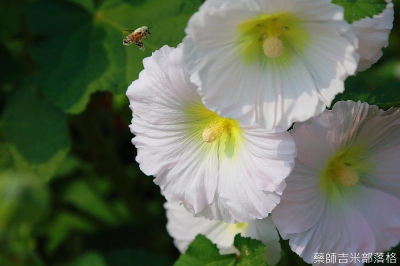 Tainan_150307_041.jpg