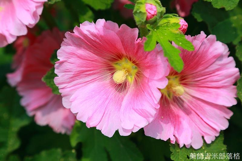 Tainan_150307_042.jpg