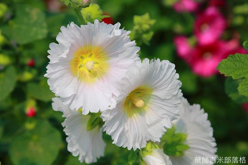 Tainan_150307_044.jpg