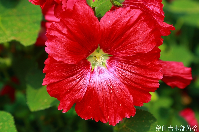 Tainan_150307_049.jpg