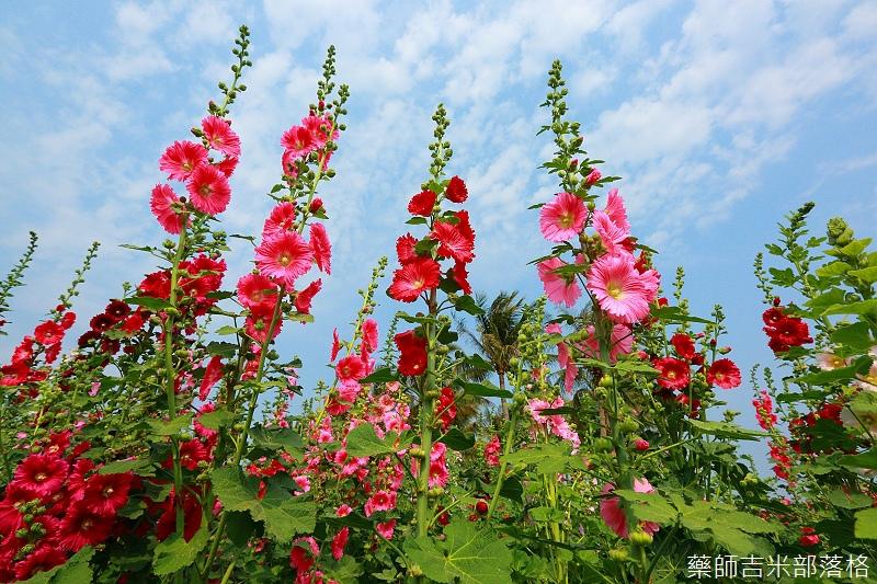 Tainan_150307_110.jpg