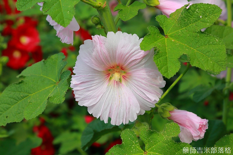 Tainan_150307_133.jpg