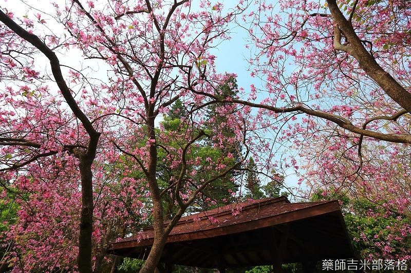 Tainan_150308_552.jpg