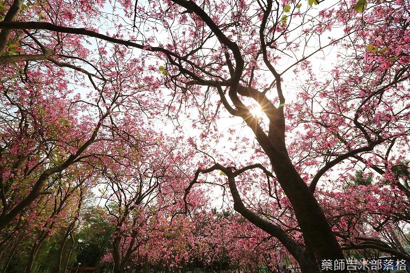 Tainan_150308_563.jpg