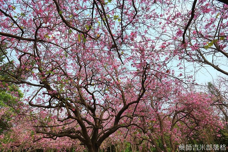 Tainan_150308_582.jpg