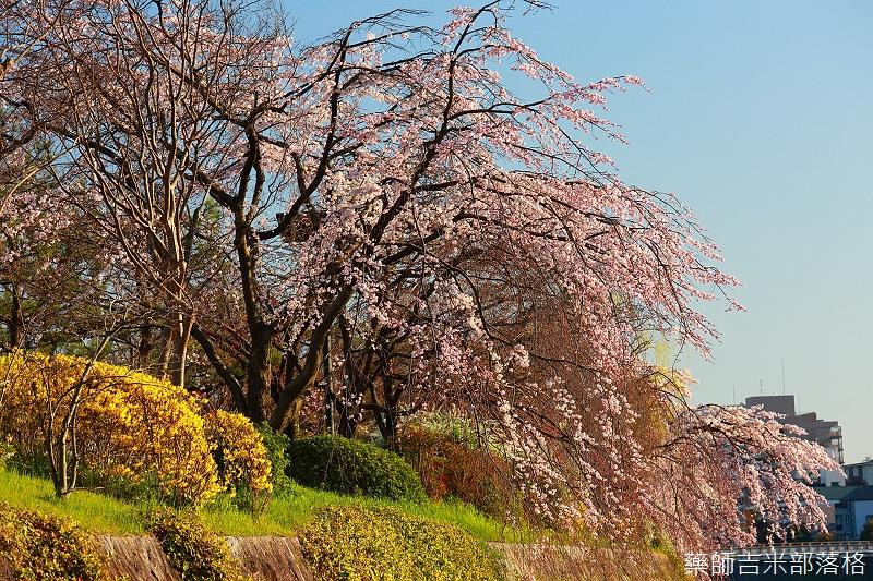 Kyoto_150328_059.jpg