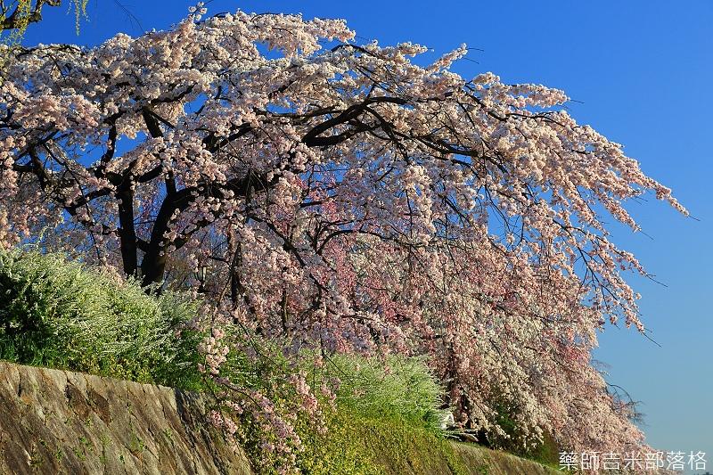Kyoto_150328_101.jpg