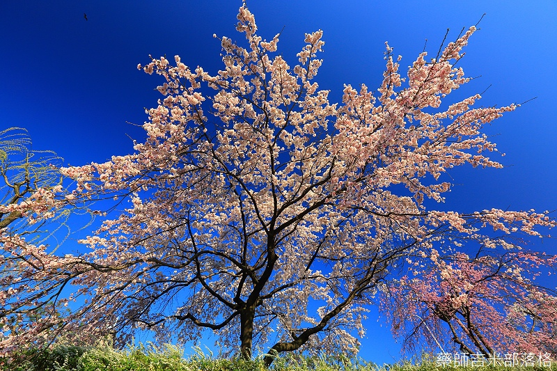Kyoto_150328_102.jpg