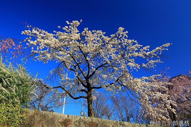 Kyoto_150328_132.jpg