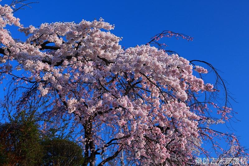 Kyoto_150328_178.jpg