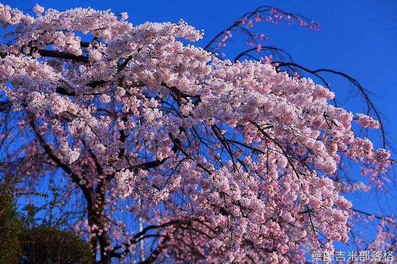 Kyoto_150328_186.jpg