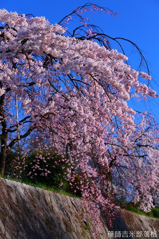 Kyoto_150328_197.jpg