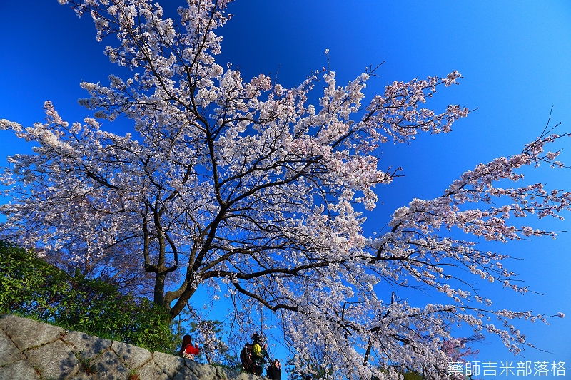 Kyoto_150328_206.jpg