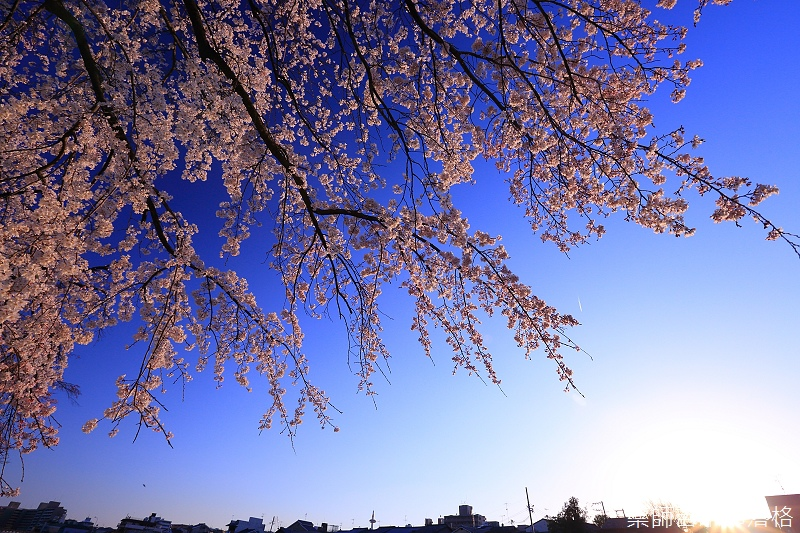 Kyoto_150328_210.jpg