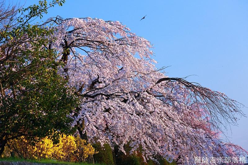 Kyoto_150328_246.jpg
