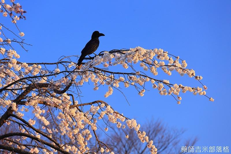 Kyoto_150328_262.jpg