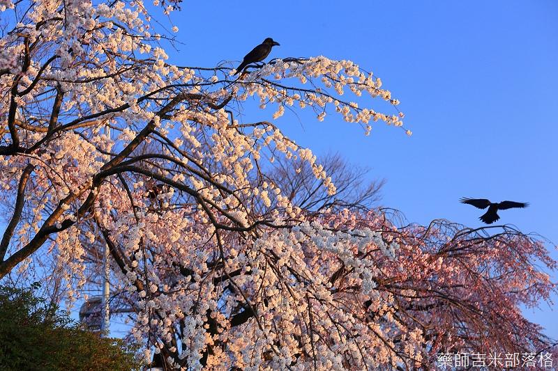 Kyoto_150328_267.jpg