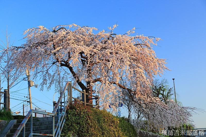 Kyoto_150328_279.jpg