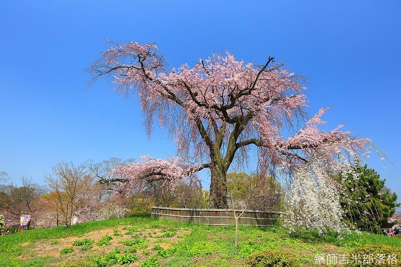 Kyoto_150330_0074.jpg