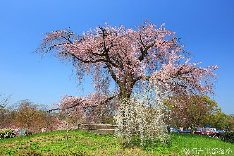 Kyoto_150330_0076.jpg