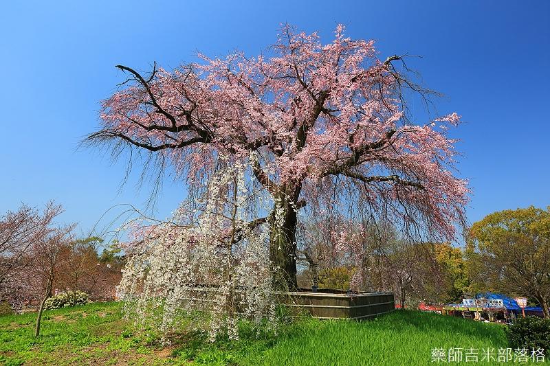 Kyoto_150330_0080.jpg