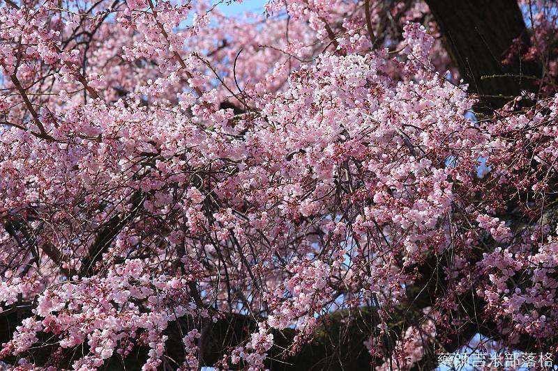 Kyoto_150330_0110.jpg