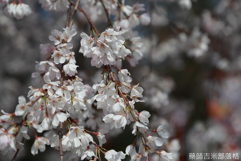 Kyoto_150330_0153.jpg
