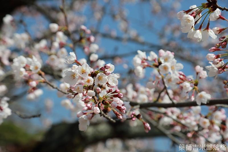 Kyoto_150330_0179.jpg