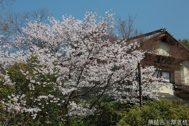 Kyoto_150330_0185.jpg