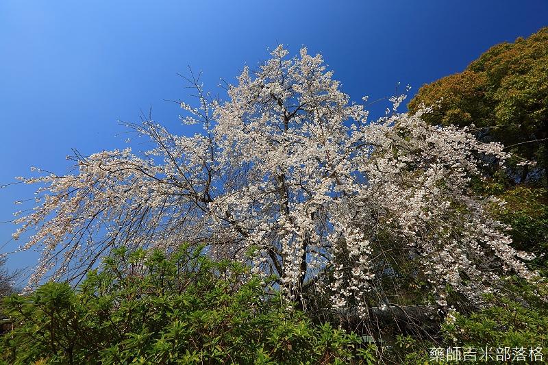 Kyoto_150330_0407.jpg