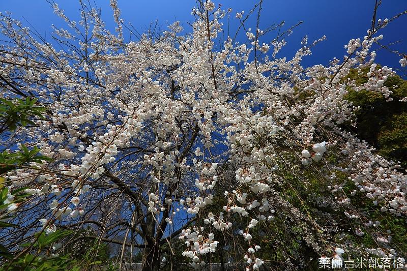 Kyoto_150330_0412.jpg