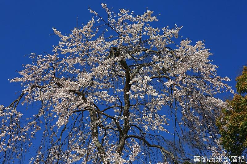 Kyoto_150330_0419.jpg