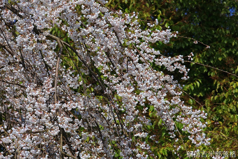 Kyoto_150330_0421.jpg