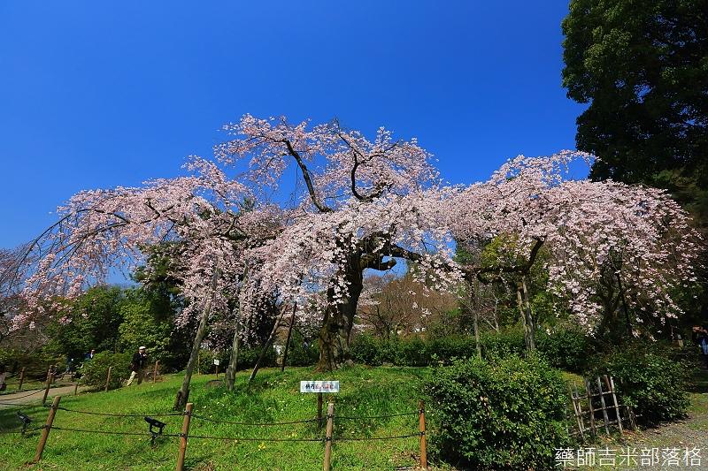 Kyoto_150330_0455.jpg
