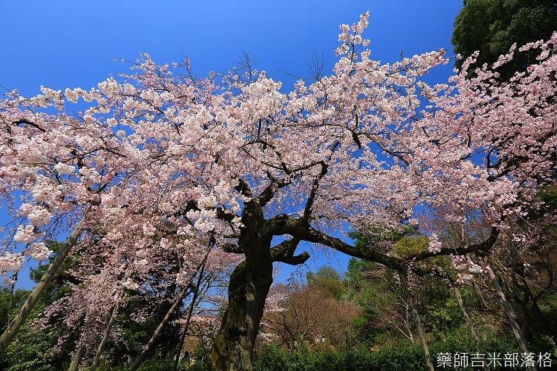 Kyoto_150330_0457.jpg