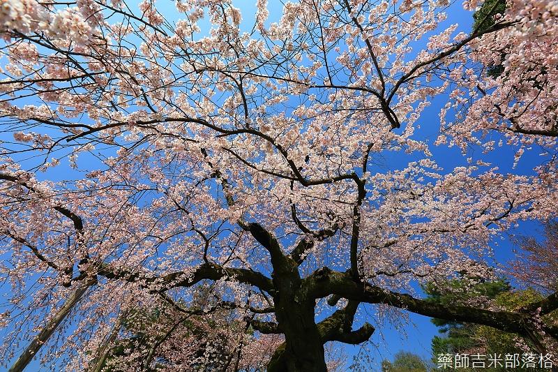 Kyoto_150330_0458.jpg