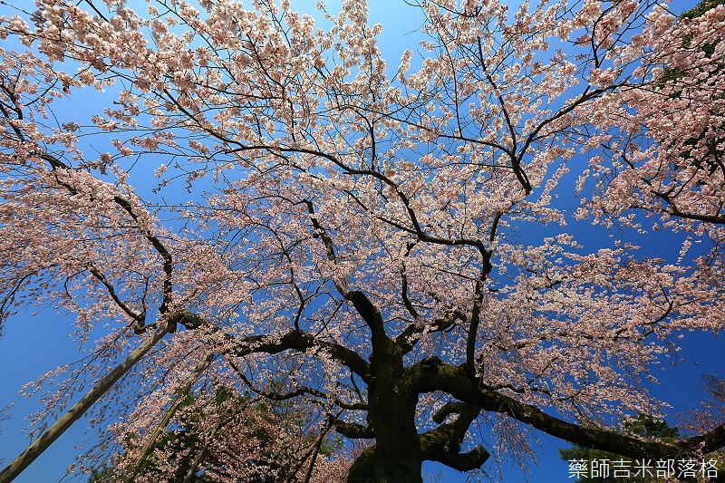 Kyoto_150330_0464.jpg