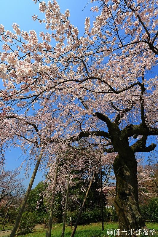 Kyoto_150330_0468.jpg