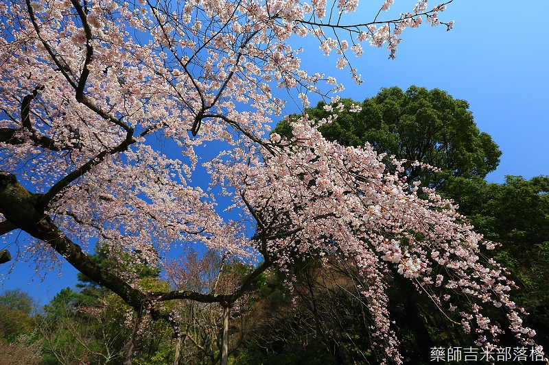 Kyoto_150330_0469.jpg
