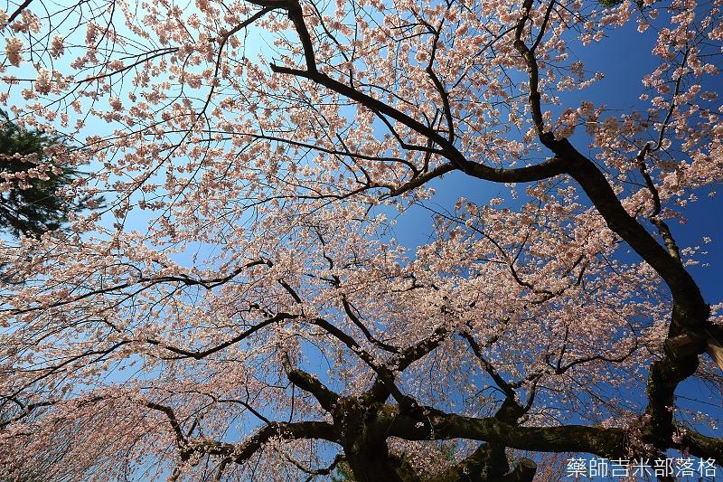 Kyoto_150330_0497.jpg
