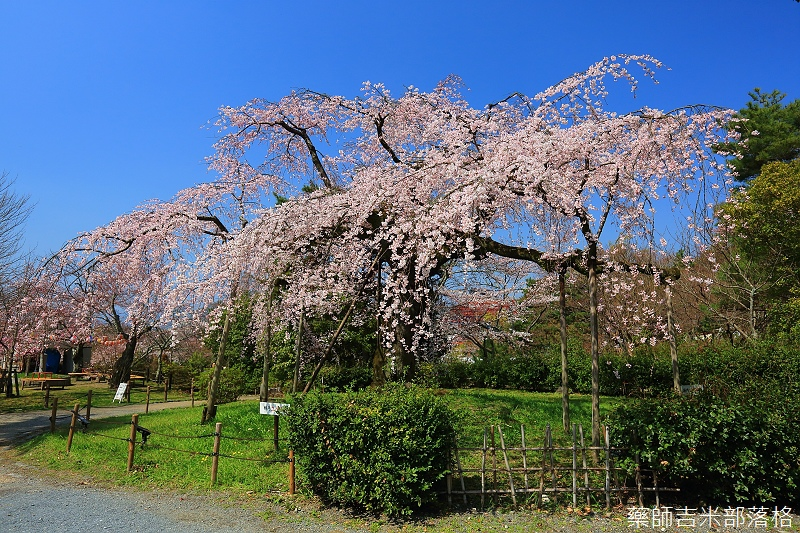 Kyoto_150330_0520.jpg