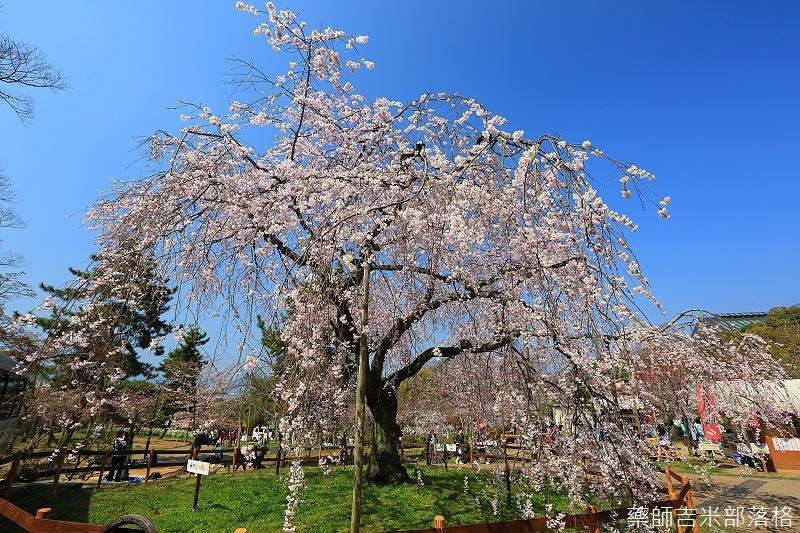 Kyoto_150330_0547.jpg
