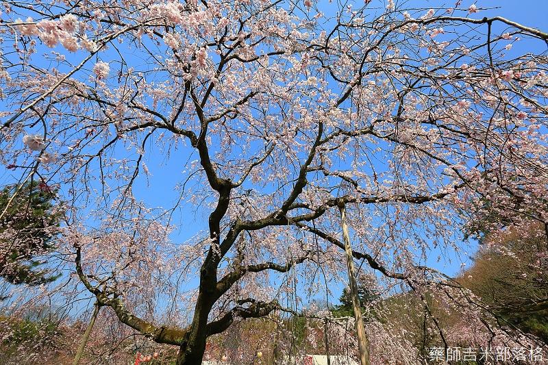 Kyoto_150330_0549.jpg