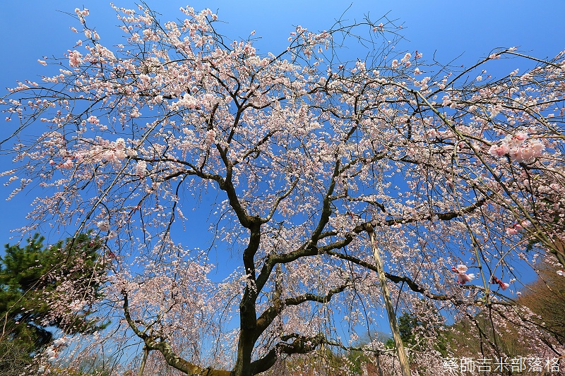 Kyoto_150330_0556.jpg