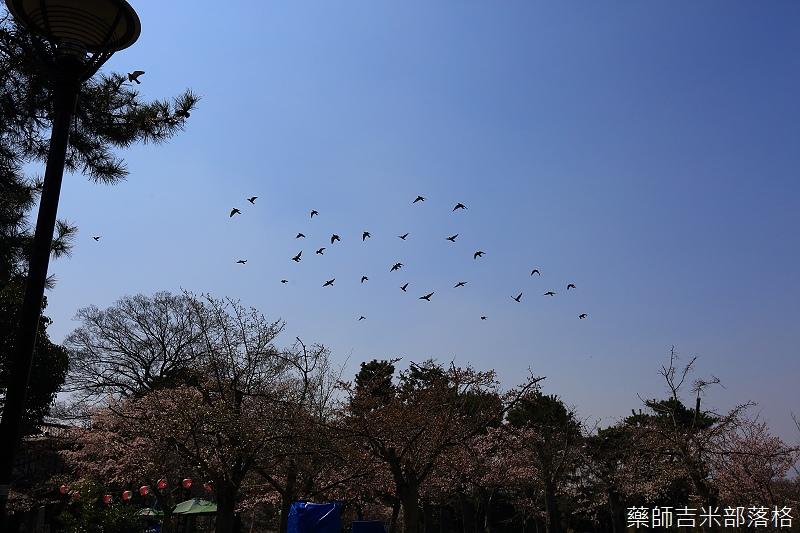 Kyoto_150330_0668.jpg